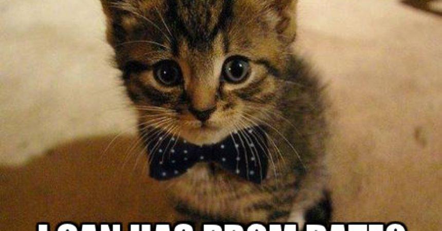 La Lingua dei LOLCAT su Twitter!