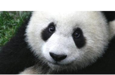La SEO, il primo posto su Google e il Panda